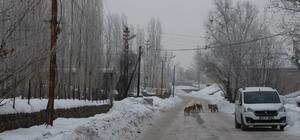 Sürü halinde gezen köpekler vatandaşı tedirgin ediyor