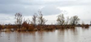 Manisa'da tarım arazileri taşkın suyu altında kaldı