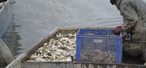 Elazığ'da 200 kilogram kaçak balık yakalandı