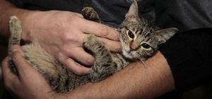 Odunpazarı'ndan evinde 17 sokak hayvanı besleyen vatandaşa yardım eli