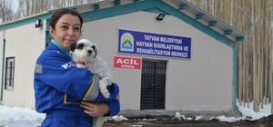 Tatvan'da hayvan hastanesi kuruldu
