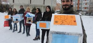 Sokak kedilerine üniversite öğrencilerinden sıcak yuva