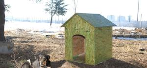 SDÜ kampüsündeki sokak hayvanları için kulübe
