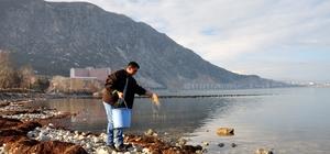 Buz tutan Eğirdir Gölü'nde kuşlara yem bırakıldı