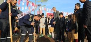 Mezitli'de 27. jakaranda koruluğu oluşturuldu