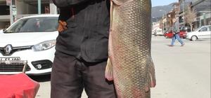 Erzincan'da yakalanan turna balıkları ilgi gördü