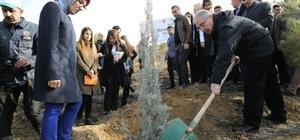 Mardin'de 'Bereket Ormanlarına' fidan dikildi
