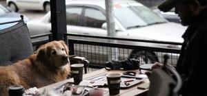 Başkent'te hayvan dostu örnek işletme