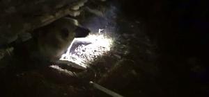 İnşaat kalıplarının arasında sıkışan köpeği itfaiye ekipleri kurtardı