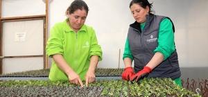 Çankaya'da 500 bin çiçek için hazırlıklar başladı