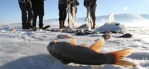 Çıldır Kristal Göl 4. Uluslararası Kış Şöleni