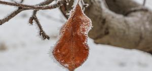 Doğuda soğukların Sibirya'yı geçmesi