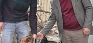 Giresun'da kaybettiği av köpeğini Kastamonu'da buldu