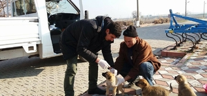 Kırkağaç'ta sahipsiz köpeklere sağlık kontrolü