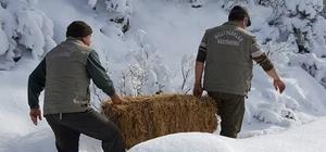 Tosya'da yaban hayvanları unutulmadı