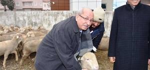 Koyun yetiştiricilerine damızlık koç dağıtıldı
