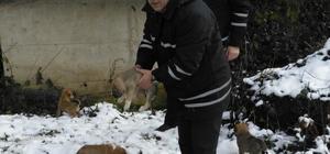 Ordu'da minik köpeklere sıcak yuva