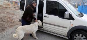 Eziyet edilen köpek koruma altına alındı