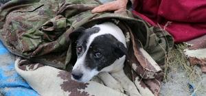 Kapalı mahalle yolu yaralı köpek için açıldı
