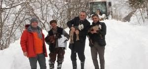 Mezrada mahsur kalan iki çoban ve sürü kurtarıldı