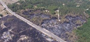 Uzunköprü'de çamlık ormanı yenileniyor