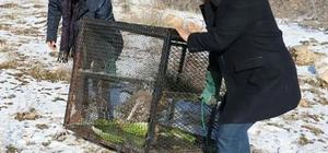 Oklu kirpi satılmak üzereyken kurtarıldı