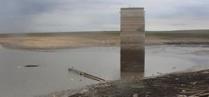 Su seviyesi azalan gölette balık ölümleri meydana geldi