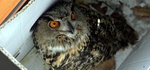 Ardahan'da yaralı Puhu kuşu tedavi altına alındı