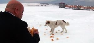Tatvan'da yaban ve sokak hayvanları için yem bırakıldı