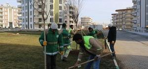 Haliliye'de yeşillendirme çalışmaları devam ediyor
