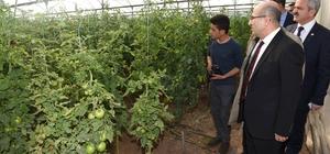 Mülteciler serada sebze yetiştiriyor
