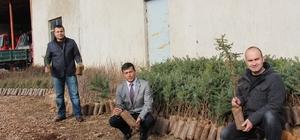 Bucak'ta ücretsiz fidan dağıtımı sürüyor