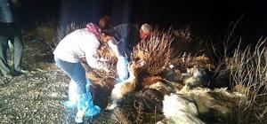 Tekirdağ'da 15 keçi telef oldu