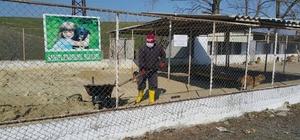 Sokak hayvanları için zemin kumu yenileme çalışmaları