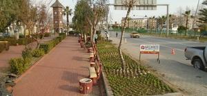 Alanya Belediyesi peyzaj düzenlemelerine devam ediyor
