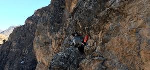 Mahsur kalan 2 keçi AFAD ekiplerince kurtarıldı