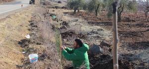 Kilis'te karayolları ağaçlandırılıyor