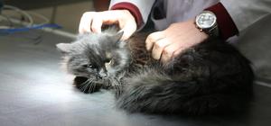 Yaralı sokak kedisi ameliyat edildi