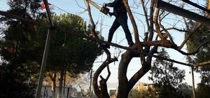 Elektrik tellerine dolanan ağaçlar budanıyor