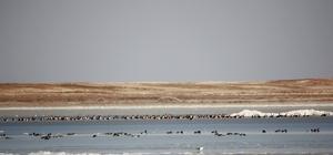 Havaların ısınması göçmen kuşlara yaradı
