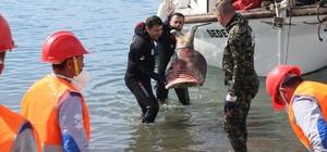 Bodrum'da deniz dibi temizliği Gümbet'te devam etti