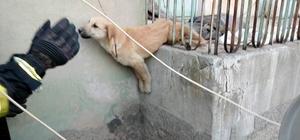 Demir korkuluklara sıkışan köpeği itfaiye kurtardı