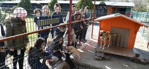Öğrenciler sokak hayvanlarını yalnız bırakmadı