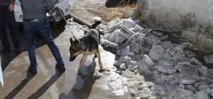 Metruk evde tutulan köpek, şikayet üzerine kurtarıldı