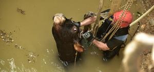 Kuyuya düşen inek vinçle kurtarıldı