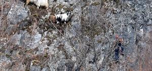 Keçileri kurtarmak için AFAD ekipleri çalışma başlattı