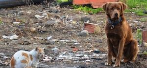 Sokak köpeği ile kedinin dostluğu