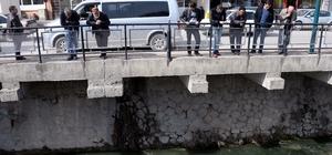 Tokat'ta balık ölümleri