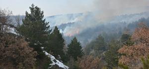 Çankırı'da orman yangını