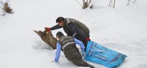 Yabani hayvanlar için doğaya yem bıraktılar
